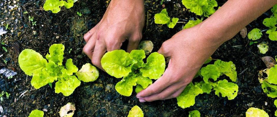 Как да стана биологичен производител?